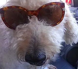 セラピー犬レアのお仕事
